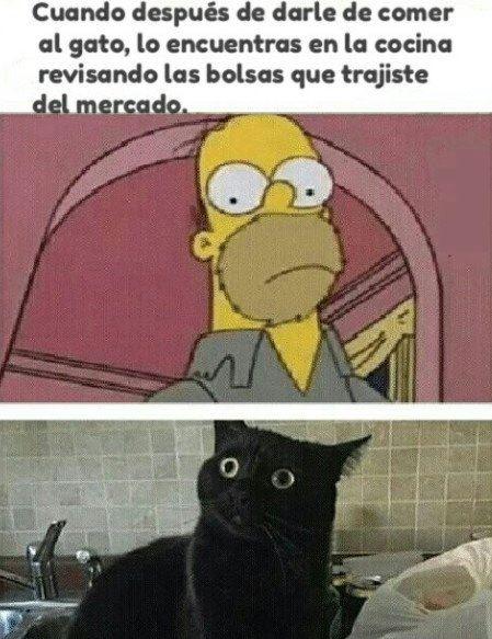 cuando despues de darle de comer al gato lo encuentras revisando las bolsas
