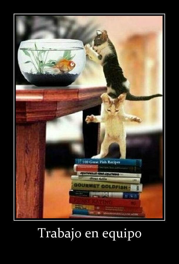 definicion de trabajo en equipo para gatos