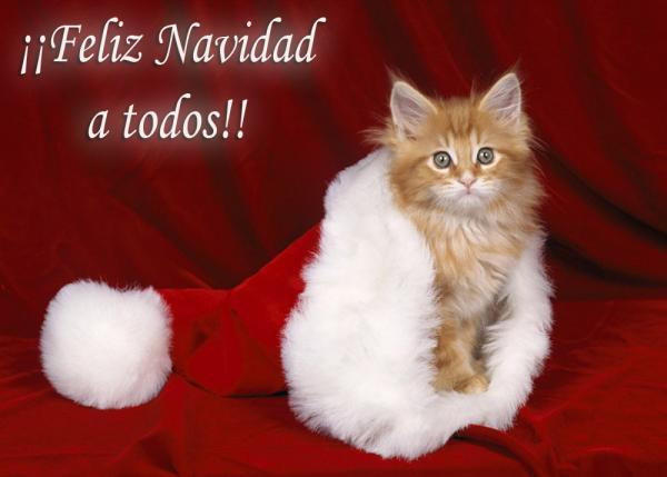 felicitaciones de navidad 8 feliz navidad a todos gatito