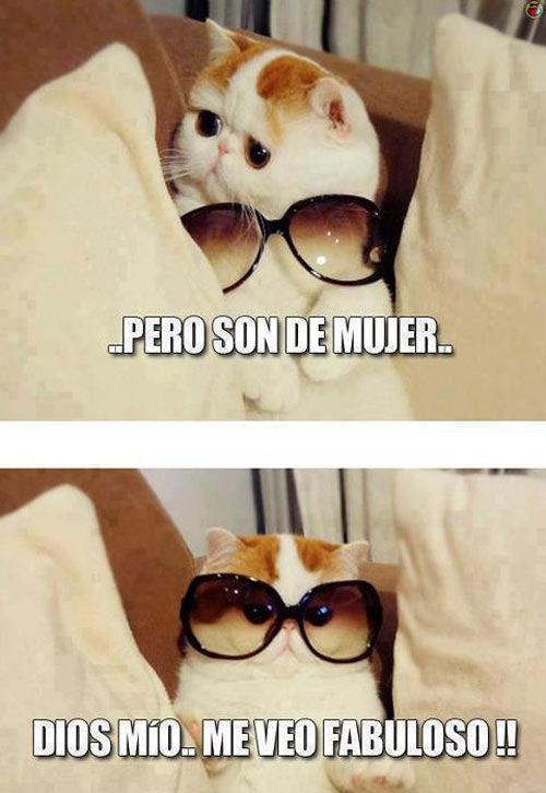 gafas de mujer pero el gato se ve fabuloso