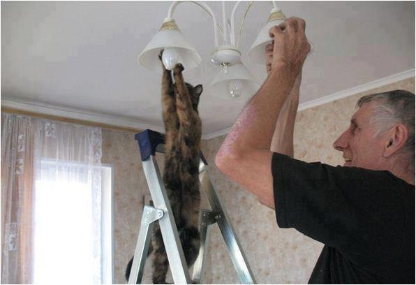 gato ayudando a cambiar la bombilla