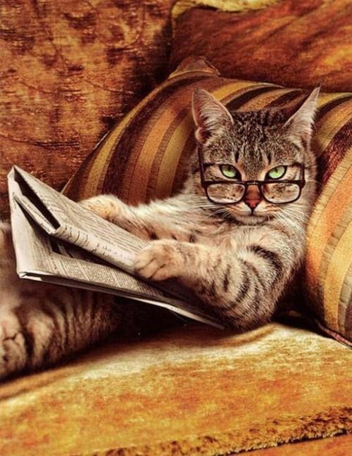 gato con gafas leyendo are you kidding me