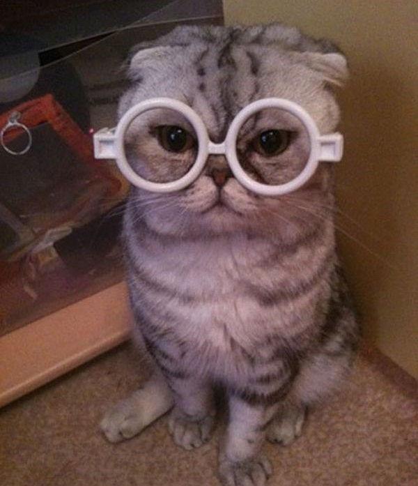 gato coqueta
