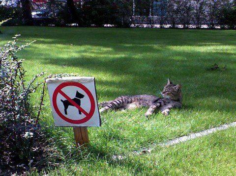 gato descansando en zona de prohibido perros