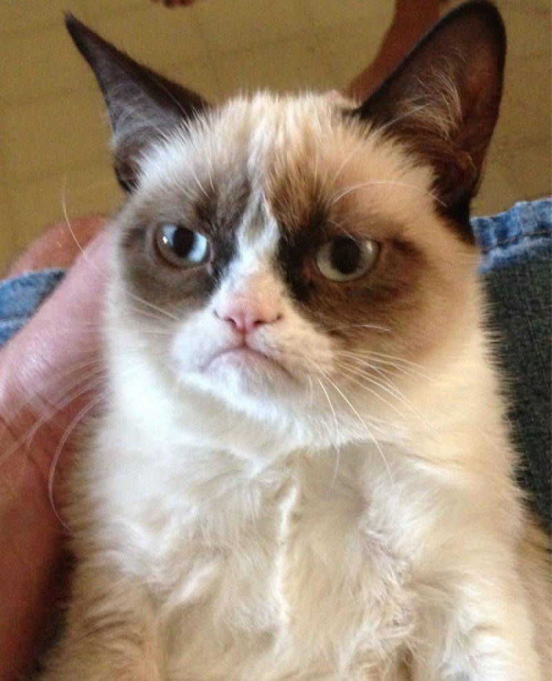 gato-enfadado-21