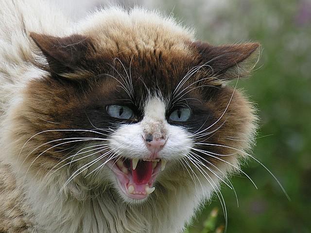 gato enfadado 3