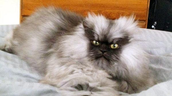 gato enfadado 6