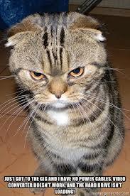 gato enfadado 7