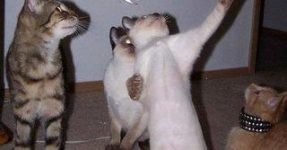 gato hablando te lo juro el raton era asi de grande
