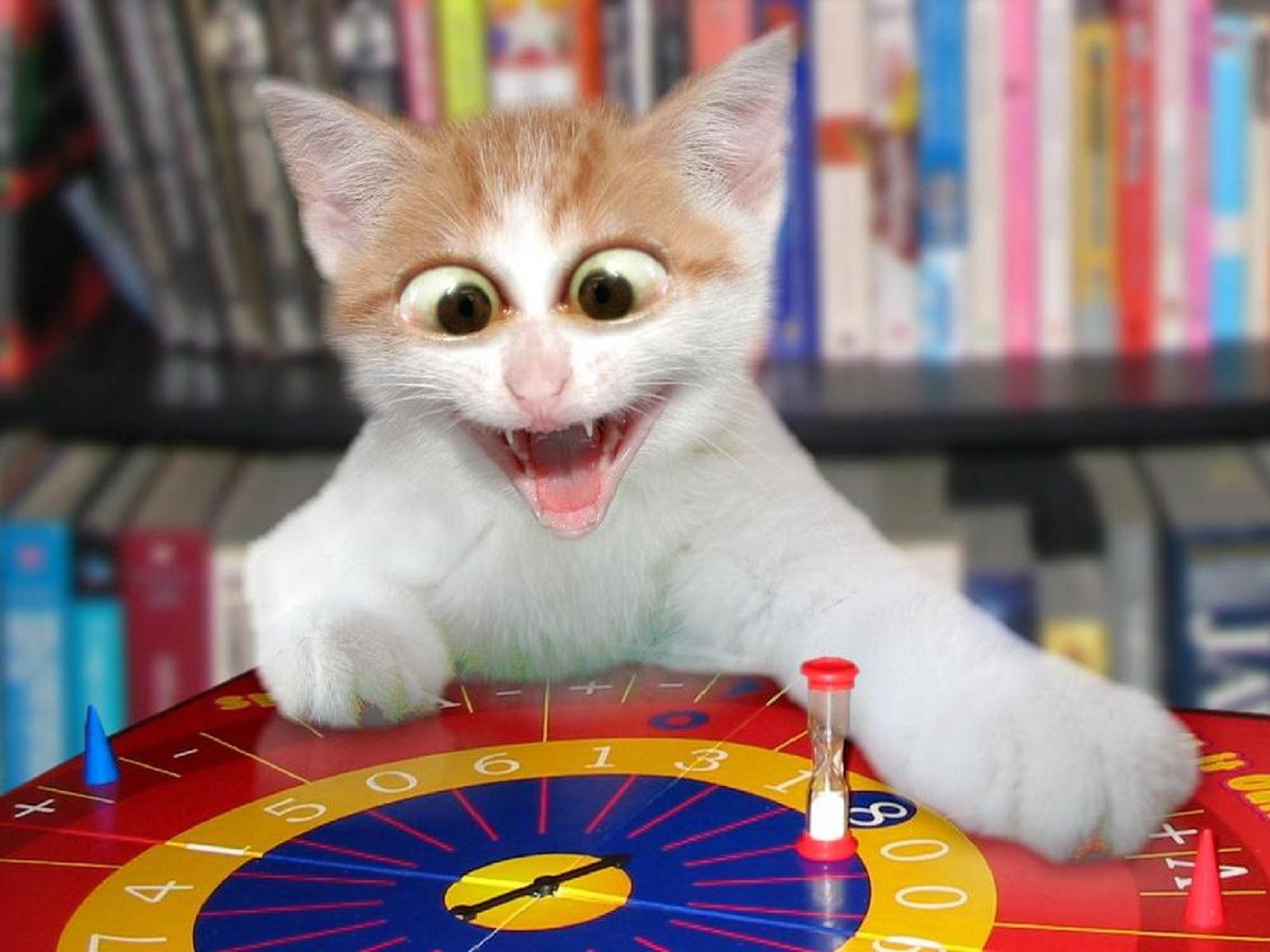 gato loco con el juego
