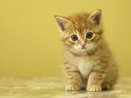 gato mirando atentamente