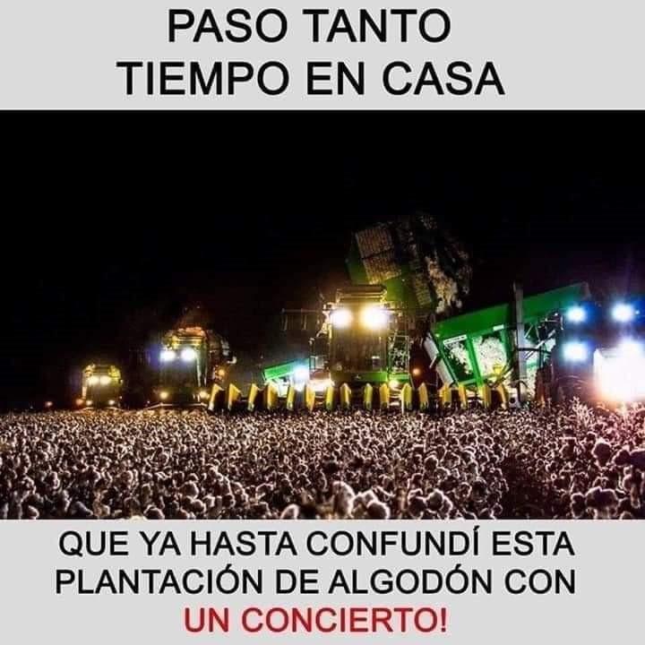 memes coronavirus paso tanto tiempo en casa que confundi esta plantacion de algodon con un concierto