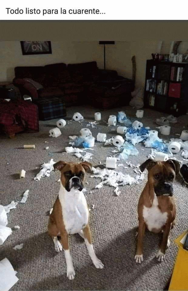 memes coronavirus perros papel higienico todo listo para la cuarente
